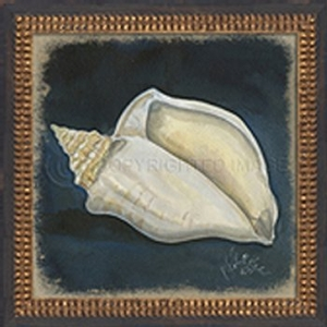 Seashell No4 Framed Art