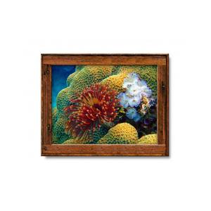 "Hawaiian ""Feather Duster"" Art  Print"