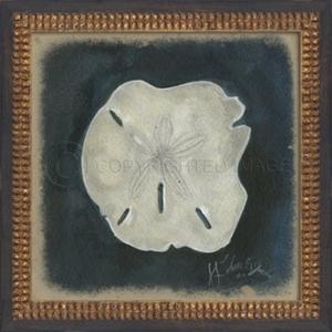 Seashell No7 Framed Art
