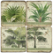 Palm Leaves Coasters S/4