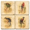Parrot Coasters, Set Of 4