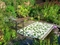Bali - Forest Green & Cream Rug