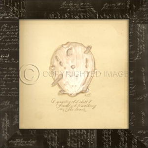 Gnarley Shell Framed Art