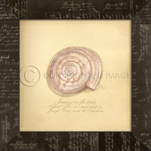 Sundial Shell Framed Art