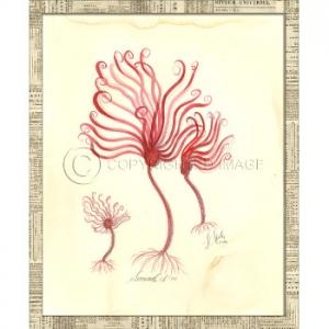 Seaweed03  Framed Art