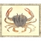 Crab08 Framed Art