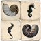 Seahorse And Shell Marble Coasters