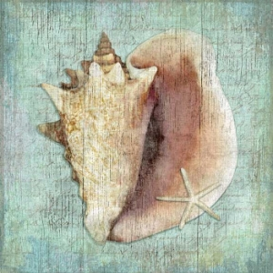 Conch Shell Wall Art