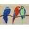 Parrots Bright Indoor Outdoor Rug