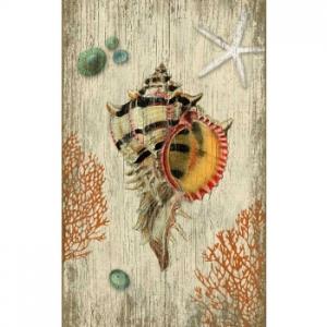 Rustic Shell Wall-Art-Sn-563