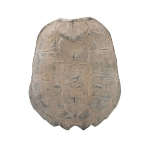 Cretaceous Spiny Turtle Shell Wall Decor, Ossified Grey