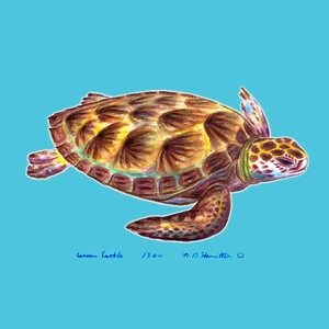 Sea Turtle Coaster Set Of 4