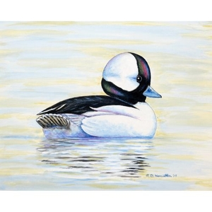 Bufflehead Duck Flag 12.5X18