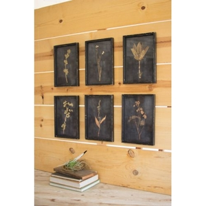 Kalalou Botanical Prints Under Glass Set of 6