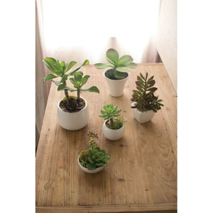 Artificial Succulents with White Ceramic Pots Set of 5