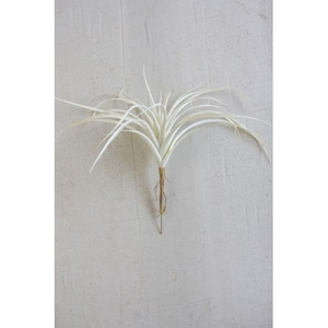 White Air Plant Large Set of 6