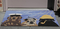"Liora Manne Frontporch Arrf Ye Mateys Indoor/Outdoor Rug Ocean 20""X30"""