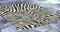 Liora Manne Visions I Zebra Indoor/Outdoor Rug Black 8'X10'