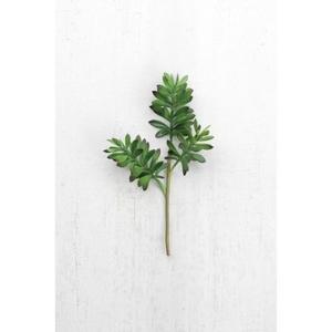 Cactus Succulent, Set of 6