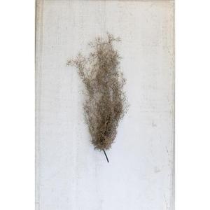 Artificial Grey Moss, Set of 6