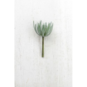 Artificial Grey Succulent, Set of 6