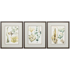 Vintage Sea Fronds Set of 3 Framed Beach Wall Art