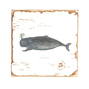 Humpback Whale Lithograph Art
