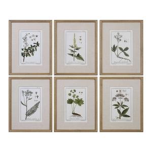 Uttermost Green Floral Botanical Study Prints S/6